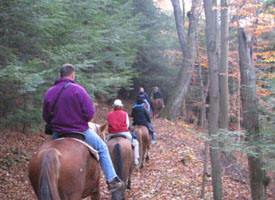 Uncle Buck's Horseback Rides in Hocking Hills Ohio
